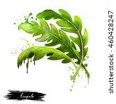 arugula icon. eruca sativa.... | Shutterstock . vector #460428247