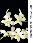 branch of white orchid on black | Shutterstock . vector #46061038