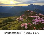 Small photo of Beautiful sunrise scenery of Hehuan Mountain in central Taiwan in springtime, with view of lovely Alpine Azalea ( Rhododendron ) blossoms on grassy fields and dramatic dawning sky in the background
