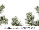 Snow Covered Trees. Fir Branc...