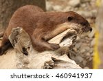 Small photo of An African Clawless Otter resting on a log along the ocean.
