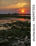 beautiful sunset on danube delta | Shutterstock . vector #460997503
