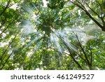 sun rays shining through trees | Shutterstock . vector #461249527