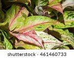 colorful leaf   Shutterstock . vector #461460733