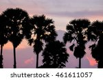 toddy or sugar palm trees in... | Shutterstock . vector #461611057