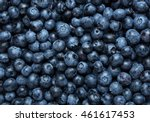 freshly picked blueberries... | Shutterstock . vector #461617453