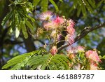 flowers and buds on blooming... | Shutterstock . vector #461889787