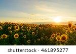 de focused beautiful yellow...   Shutterstock . vector #461895277