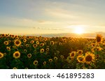 de focused beautiful yellow...   Shutterstock . vector #461895283