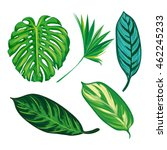 tropical leaves collection on... | Shutterstock .eps vector #462245233