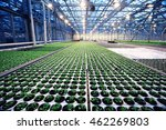 agribusiness greenhouse... | Shutterstock . vector #462269803