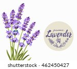 vector bunch of lavender on...