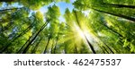 the sun beautifully... | Shutterstock . vector #462475537