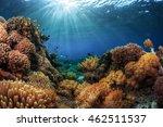 underwater shot of a vivid... | Shutterstock . vector #462511537