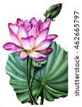 pink lotus watercolor painting. ... | Shutterstock . vector #462665797