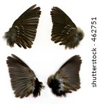 Set Of Sparrow's Wings Shown...