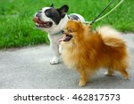 Stock photo walking dogs in park 462817573