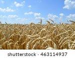 golden wheat field and blue sky    Shutterstock . vector #463114937