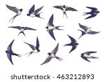 Stock vector swallow bird color set 463212893