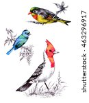 bright birds on branches with... | Shutterstock . vector #463296917