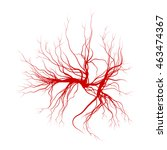 Human Veins  Red Blood Vessels...