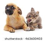 kitten that screams at puppy... | Shutterstock . vector #463600403