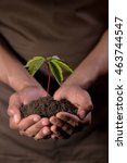 hands holdings a little green... | Shutterstock . vector #463744547