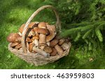 Small photo of Mushrooms porcini in the wicker basket on the green grass. Wicker basket with mushrooms. Mushrooms porcini. Mushrooms porcini in the forest.