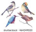 Stock photo set of colorful watercolors birds isolated on white background natural illustration watercolor 464249033