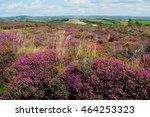 Wildflower Meadow In Bloom Nea...
