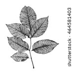 black and white  grayscale ... | Shutterstock . vector #464581403