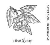acai berry  fruit  leaf  plant... | Shutterstock .eps vector #464712197