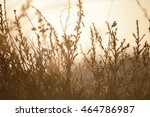 grass in the field with...   Shutterstock . vector #464786987