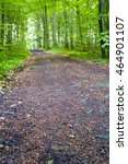Small photo of A dirt road in the mixed forest (beech, oak and alder), summer, by Beckingen, Saarland / Germany