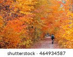 Biking In Colorful Woods With...