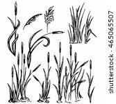 reeds marsh grass vector image