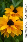 Small photo of Yellow rudbeckia flowers background