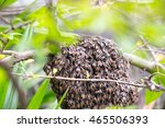 hem net on the tree branch in...   Shutterstock . vector #465506393