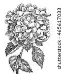Hydrangea Flower. Vector Hand...