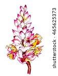 alpinia zerumbet shell ginger...   Shutterstock . vector #465625373