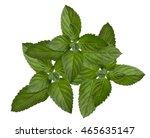 fresh mint isolate on a white... | Shutterstock . vector #465635147