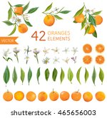 vintage oranges  flowers and... | Shutterstock .eps vector #465656003