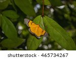 Small photo of Celerena signata in the forest thailand