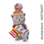 Cute Kitten Wearing A Scarf An...