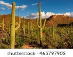 saguaro cactus at sunset in...   Shutterstock . vector #465797903