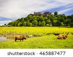 Highland Cow In Front Of...