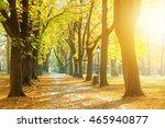 sunny park in autumn | Shutterstock . vector #465940877
