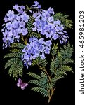 jacaranda tree with flowers and ... | Shutterstock . vector #465981203