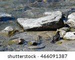 Blackbird In The River