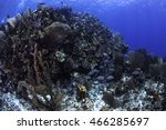 Small photo of A school of grunts swimming around a coral head